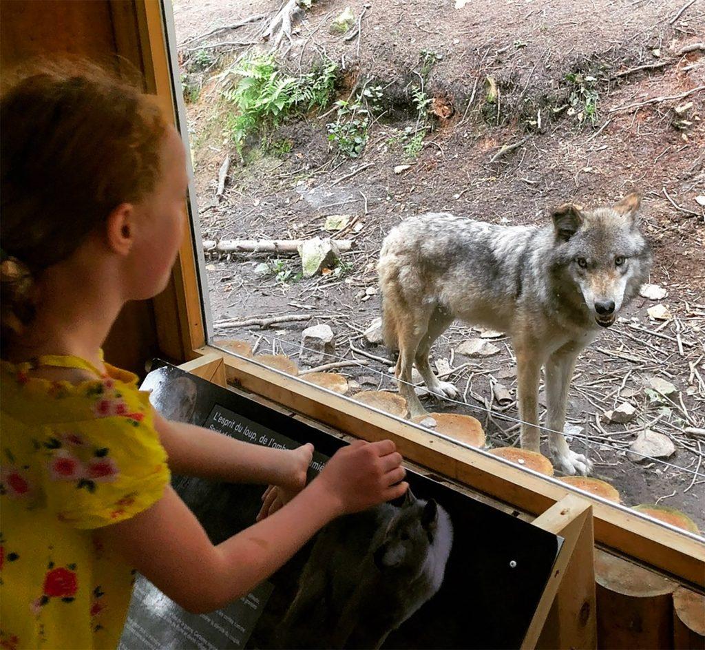 Wolf Cabin, Parc Omega, Quebec 1